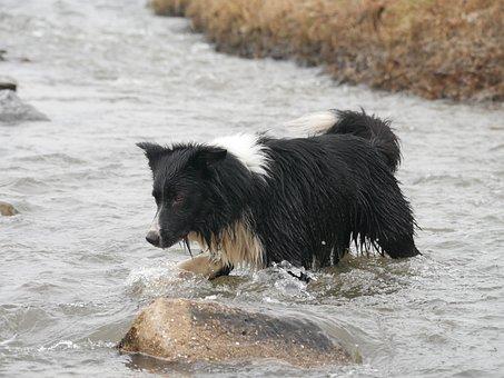 Water, Mammal, Outdoors, Nature, Animal, Dog