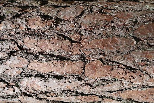 Bark, Tree, Wood, Nature, Texture, Tribe, Surface