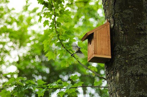 Bird, Tit, Flying, Approaching, Nest, Cabinet, Tree