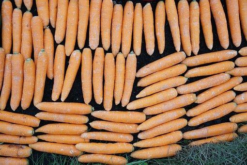 Carrots, Food, Vegetables, Grow, Healthy