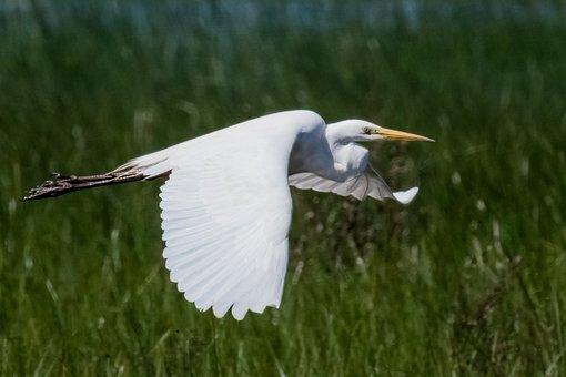 Spain, Andalucia, Doñana, Garceta Grande, Birding