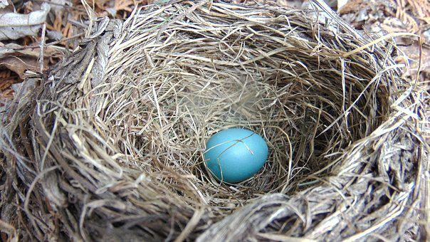 Nest, Hay, Straw, Egg, Easter, Nature, Bird, Robin Egg