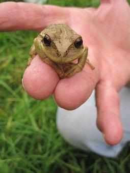 Nature, Animal, Amphibian, Frog, Wildlife, Hand, Exotic