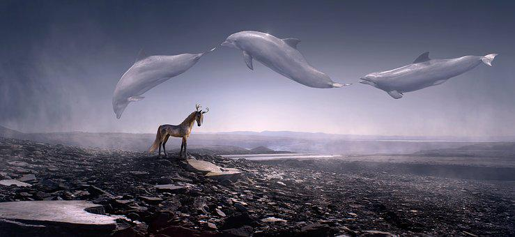 Fantasy, Dolphins, Stone Desert, Horse, Fly, Weightless