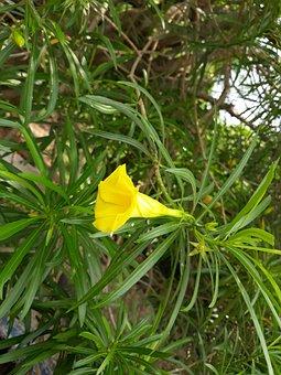 Nature, Flora, Leaf, Flower, Summer