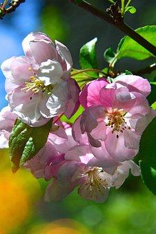 Flower, Nature, Plant, Garden, Leaf Plants