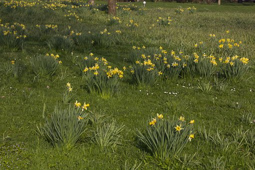 Flower, Grass, Nature, Meadow, Plant, Flowers, Summer