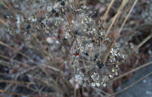 Nature, Outdoors, Flora, Season, Flower, Grass, Tree
