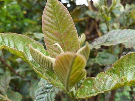 Leaf, Nature, Plant, Food