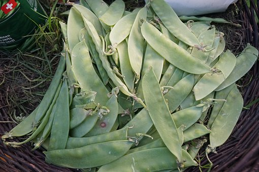 Beans, Plant, Food, Nature, Leaf, Pod