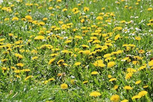 Nature, Flower, Plant, Grass, Summer, Meadow, Garden