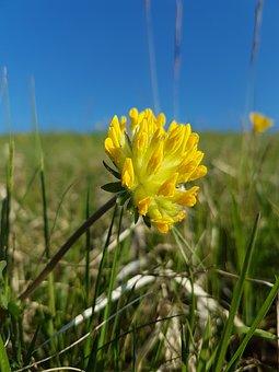 Nature, Flower, Field, Grass, Meadow, Plant, Summer