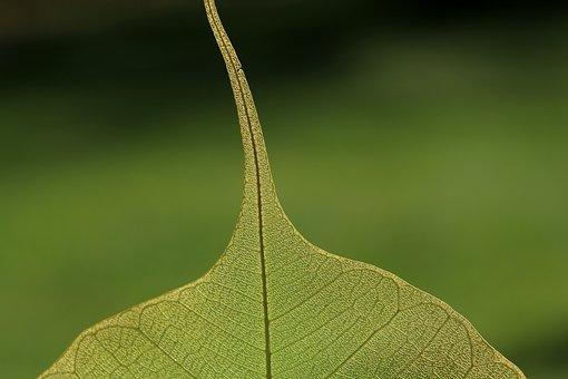 Leaf, Nature, Plant, Green, Close, Vein, Macro