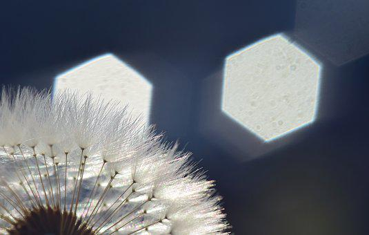 Dandelion, Back Light, Rays, Sunlight, Hell, Close
