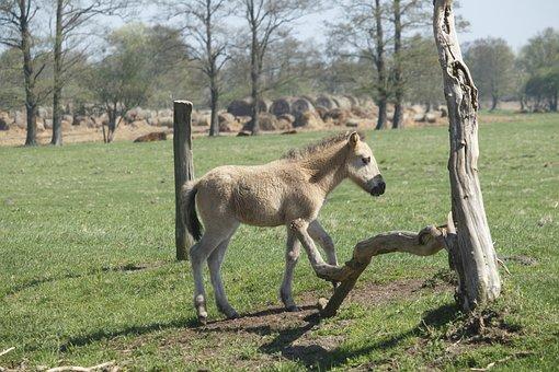 Mammals, Animals, Lawn, Farm, Nature, Polish Horse