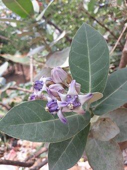 Flora, Tree, Nature, Leaf, Branch
