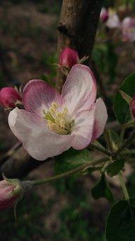 Flower, Flora, Nature, Tree, Leaf
