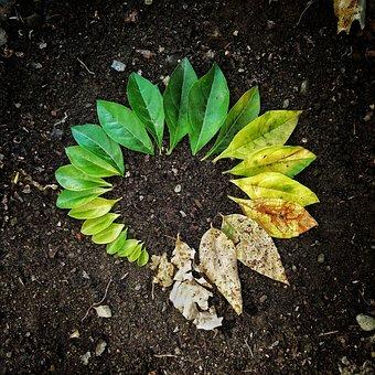 Leaf, Flora, Soil, Garden, Nature, Plant, Natural
