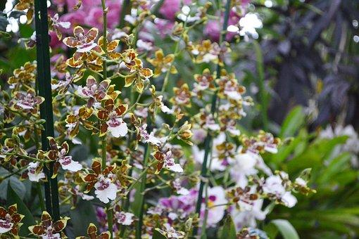 Flower, Plant, Nature, Garden, Summer, Blooming