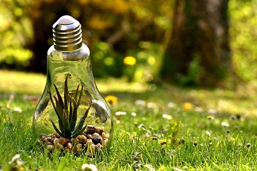 Environmental Protection, Nature, Light Bulb, Energy