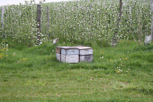 Grass, Agriculture, Nature, Farm, Summer, Bees, Hive