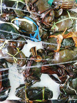 Nature, Crab, Seafood