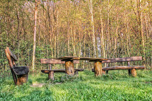 Wood, Nature, Grass, Woods, Bank, Seating Arrangement