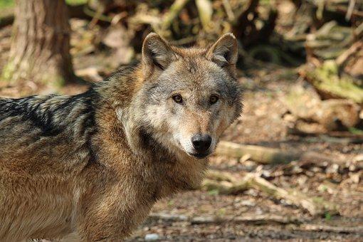 Animal World, Nature, Predator, Animal, Wild