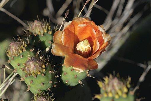 Cactaceae, Nature, Plant, Thorny