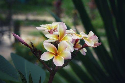 Flower, Nature, Plant, Tropical