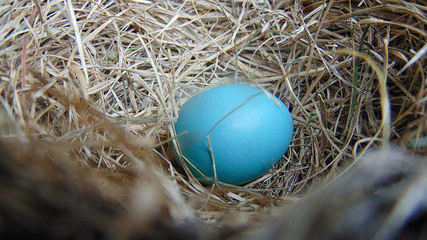 Nest, Egg, Nature, Easter, Robin, Robin Egg, Shell