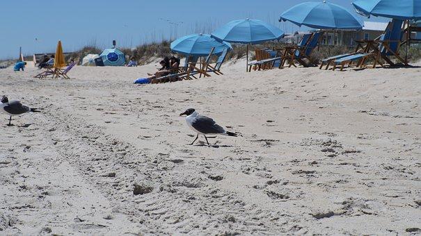 Nature, Water, Cold, Beach, Travel, Seashore