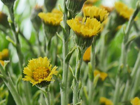 Flower, Plant, Nature, Field, Summer, Color, Season