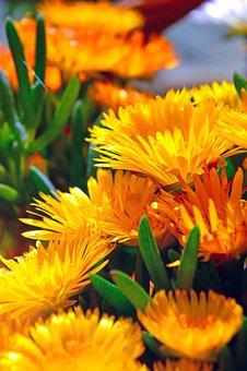 Nature, Flower, Plant, Summer, Garden, Floral, Lively