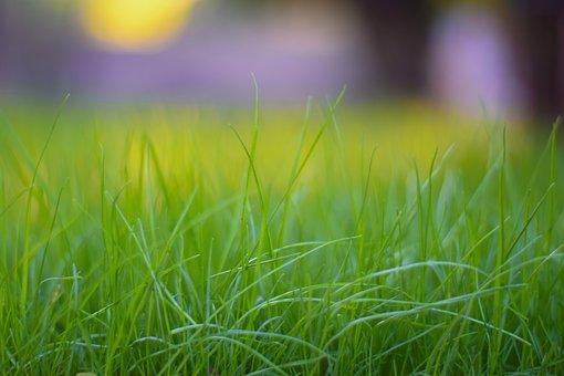 Grass, Hayfield, Field, Lawn, Nature, Summer, Growth
