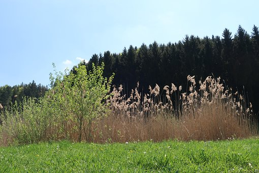 Tree, Nature, Landscape, Wood, Grass, Flower Meadow
