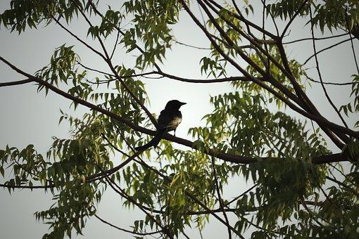Tree, Bird, Nature, Wildlife, Outdoors, Travel