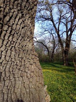 Tree, Nature, Wood, Trunk, Bark