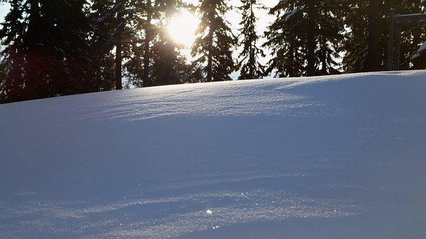 Snow, Winter, Cold, Wood, Nature, Panoramic, Tree, Ice