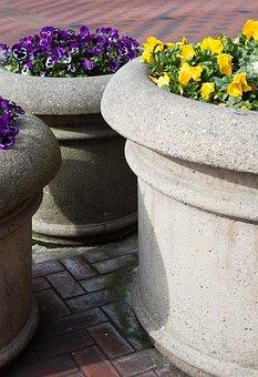 Flower, Stone, Flora, Pot, Garden, Purple, Yellow