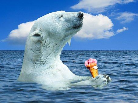 Nature, Polar Bear, Animal, Bear, Predator, Ocean