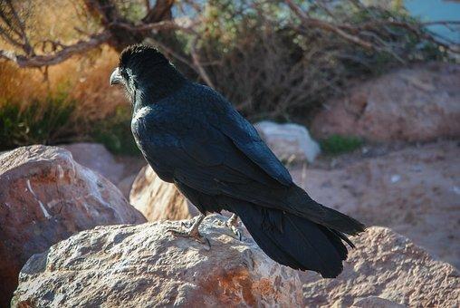 Nature, Birds, Wild Life, Animalia, Outdoors, Wild