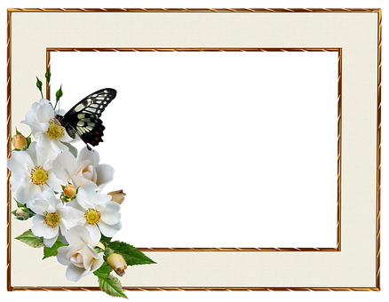 Frame, Border, White Rose, Butterfly, Decorative