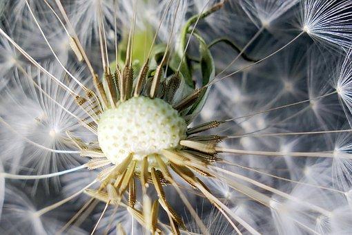 Nature, Dandelion, Flower, Plant, Summer, Bright, Color