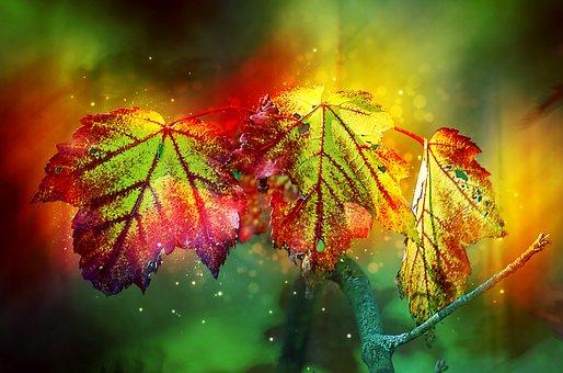 Autumn, Color, Leaves, Colorful, Golden Autumn