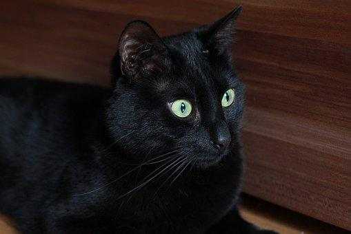 Cat, Portrait, Cute, Mammal, Pet, Animal, Domestic, Eye