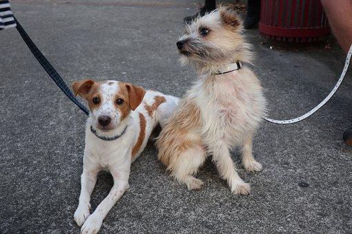 Dog, Canine, Pet, Mammal, Cute, Happy, Doggy, Puppy