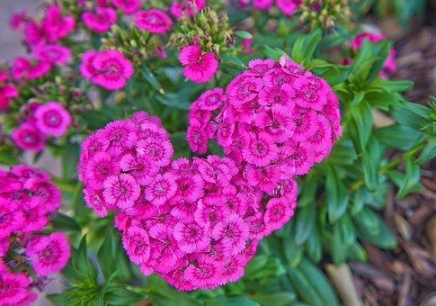 Flower, Nature, Flora, Floral, Leaf, Garden, Summer