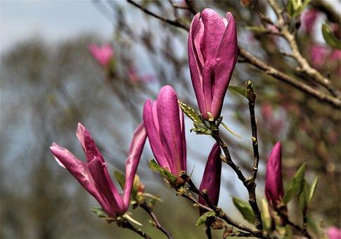 Flower, Nature, Flora, Outdoors, Tree, Bud, Shrub
