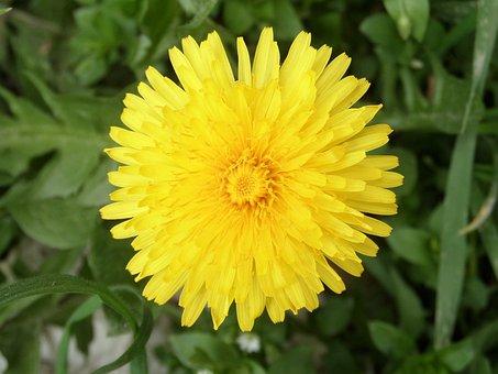 Nature, Flower, Plant, Summer, Garden, Flowers, Close